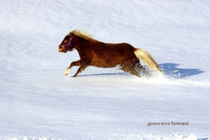 Pixie runs in the snow