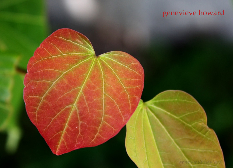 heart leaf valentine