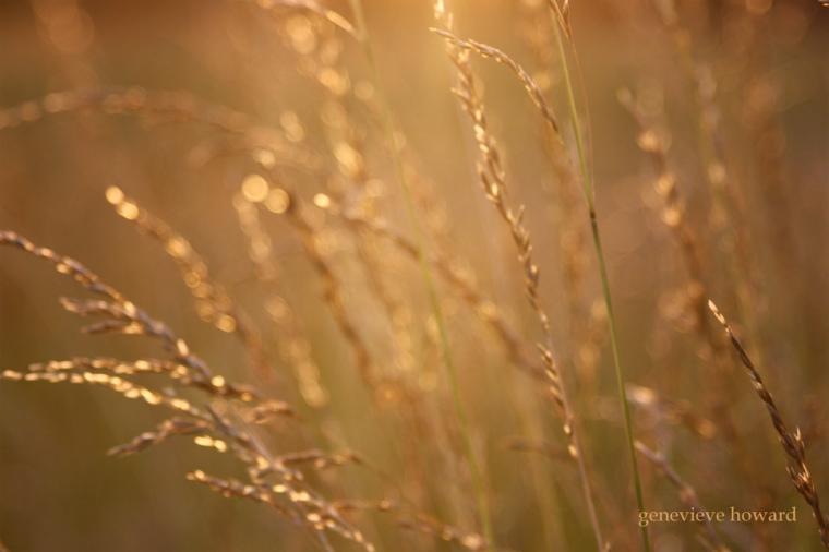 Golden light on the field