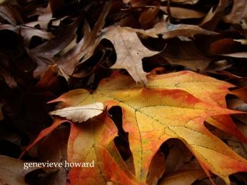 brown-leaf