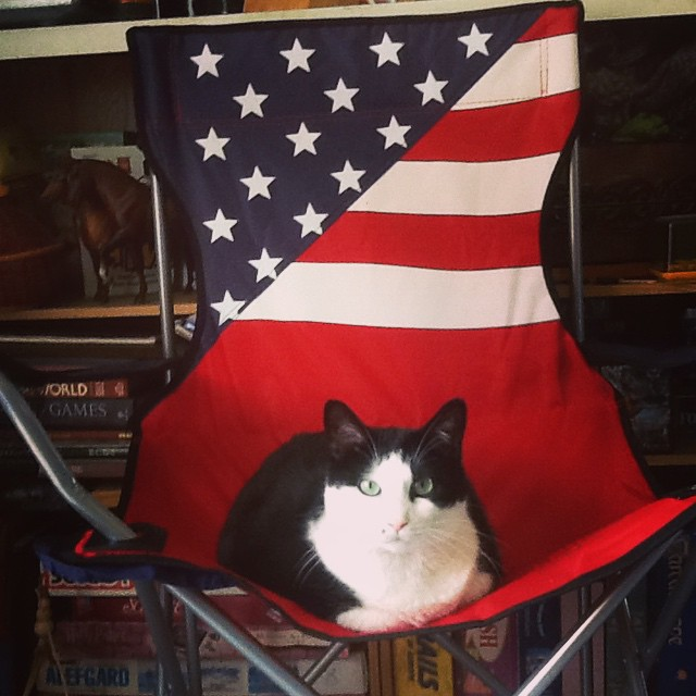 cat on american flag chair