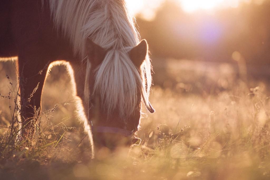 Pixie grazing